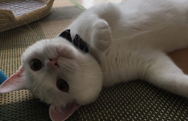 猫専用ホテル予約状況